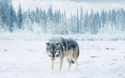 Örök tél – A huszadik század sötétsége
